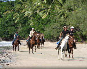 Cape Trib Horse Riding, 90 Minute Beach And Rainforest Ride, Daintree QLD