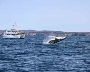 Extreme Whale Watching Cruise, 2 Hours - Jervis Bay - For 2