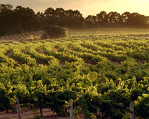 Margaret River Winery, Private Aircraft Sightseeing Flight For 2