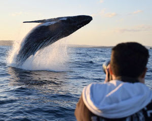 Extreme Whale Watching Safari For 2 (Whale Sighting Guarantee) SPECIAL OFFER - Sydney