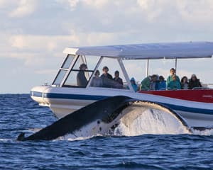 Eco Extreme Whale / Wilderness Cruise Family Pass Jervis Bay, NSW