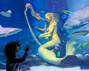 SEA LIFE Melbourne Aquarium Entry