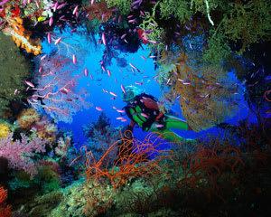 Discover Scuba Diving Experience - Gold Coast