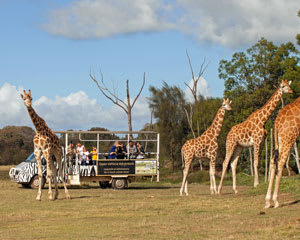 Werribee Open Range Zoo Off Road Safari and Admission - Melbourne