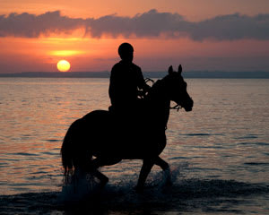 Horse Riding, St Andrew's Beach Horse Ride - Mornington Peninsula TWILIGHT RIDE