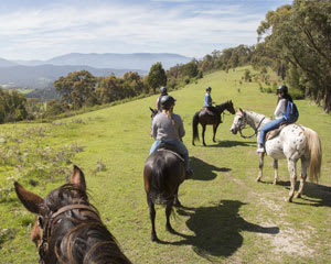 Horse Riding, 1 Hour Bush Horse Trail Ride - Chum Creek, Yarra Valley Melbourne