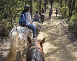 2 Hour Yarra Valley Mountain Hut with Wine Tasting Horse Ride