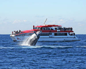 Whale Watching Cruise - Darling Harbour, Sydney