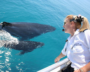 Brisbane Whale Watching Cruise (Includes Lunch)