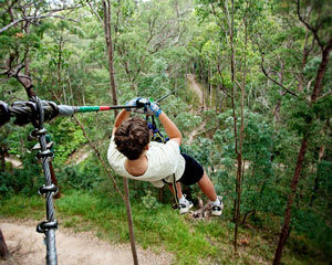 Flying Fox High Ropes Adventure Park - Tamborine Mountain, Gold Coast