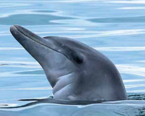 Dolphin Watching & Sailing Cruise - Nelson Bay, Port Stephens