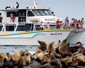 Seal Cruise for Family Of 4 - Phillip Island