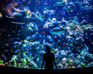Cairns Aquarium Platinum Pass