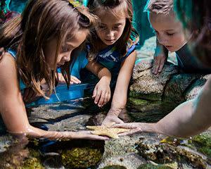 SEA LIFE Melbourne Aquarium Entry, with Digital Photo Pack Bundle