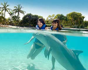 Dolphin Adventure at Sea World - Gold Coast