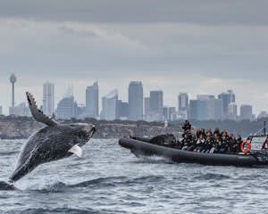 Extreme Whale Watching Safari, Whale Sighting Guarantee - Circular Quay