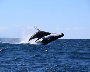 Extreme Whale Watching Safari For 2 (Whale Sighting Guarantee) SPECIAL OFFER - Circular Quay