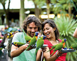 Currumbin Wildlife Sanctuary Entry - Gold Coast