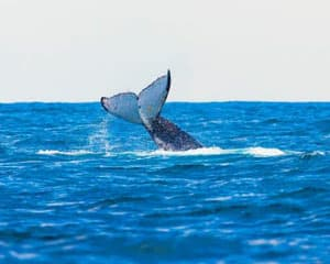 Whale Watching Cruise & Aquarium Entry, Weekends - Perth