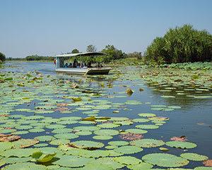 Wetland Wildlife Cruise, Full Day - Darwin