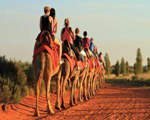 Sunset Camel Ride, 60 Minutes - Uluru & Kata-Tjuta
