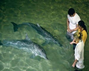 Moreton Island Fun Day with Dolphin Feeding - Brisbane