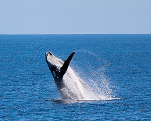 Whale Watching Cruise - Dunsborough, WA