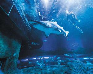 Snorkel with Sharks at The Aquarium of Western Australia - Perth