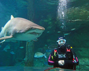Shark Diving - Sydney Aquarium Darling Harbour - Weekday