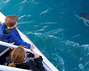 Dolphin and Whale Watching Cruise with Afternoon Tea