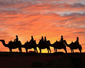 Sunrise Camel Ride, Yulara - 60 Minutes