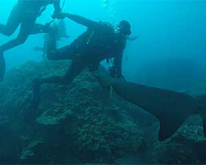 Ocean Dive with Sharks, Sunshine Coast