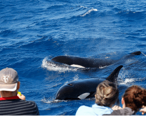 Killer Whale Expedition from Bremer Bay