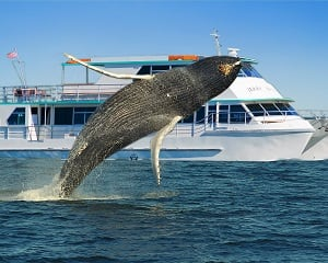 Whale Watching with Breakfast or Lunch - Sydney - Weekend