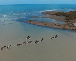 Horse Back Riding Tour - Cape Tribulation