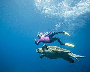 Sea Turtle Snorkel Tour, 2.5 Hours - Julian Rocks, Byron Bay