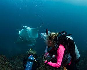 Introductory Scuba Dive Course, 5 Hours - Julian Rocks, Byron Bay