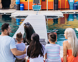 Sea World Seal Encounter - Surfers Paradise, Gold Coast