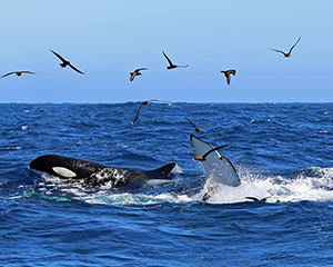 Killer Whale Expedition from Bremer Bay, For 2