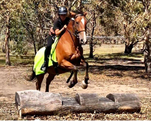 Introduction to Trail Horse Riding, 90 Minutes - Melbourne