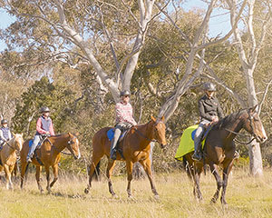 Scenic Horse Riding Tour with Lunch, 2.5 Hours - Melbourne