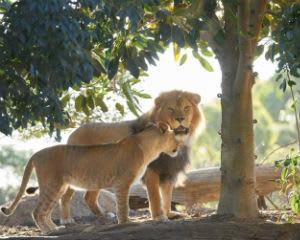 Sunset Safari at Werribee Open Range Zoo