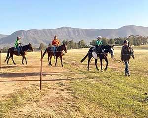 Vineyard Horse Trail Ride, 1 Hour - Hunter Valley