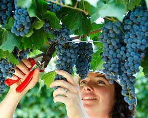 Wine Education Class with 2 Course Lunch - Swan Valley, Perth