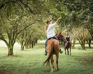 Horseback Riding Tour - The Farm, Byron Bay