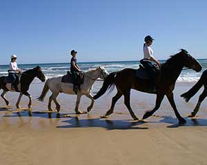 Beach Horse Ride and Brewery Lunch - Mornington Peninsula