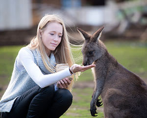 Bonorong Wildlife Sanctuary Feeding Tour - Hobart