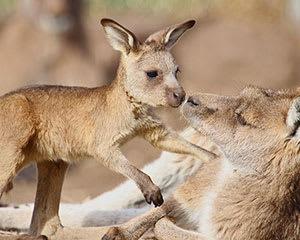 Bonorong Wildlife Sanctuary Night Feeding Tour - Hobart