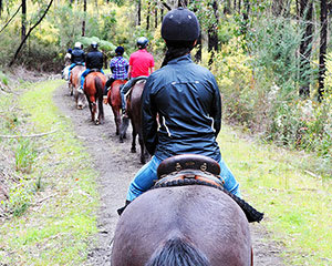 Bushland Horse Ride, 2 Hours - Bunyip State Park, Melbourne