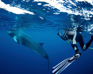 Minke Whale Diving Tour, 4 Nights - Great Barrier Reef, Departing Cairns